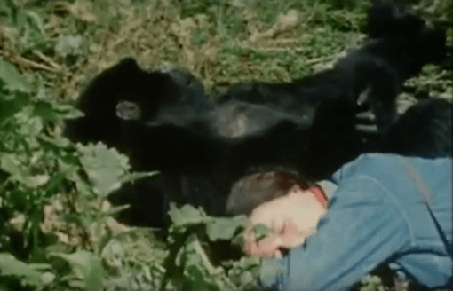 dian fossey life and death In december 2017, dian fossey: secrets in the mist, a three-hour series the series tells the story of fossey's life, work, murder and legacy.